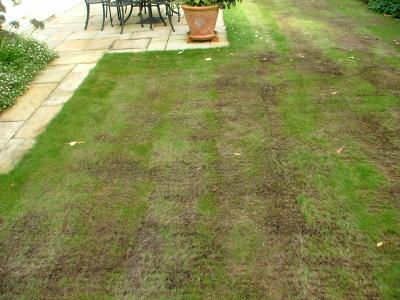 The same customers lawn before the GreenThumb Aylesbury team we're treating it.