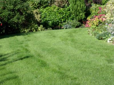 Customers lawn which has been treated by GreenThumb Brentwood and Chelmsford