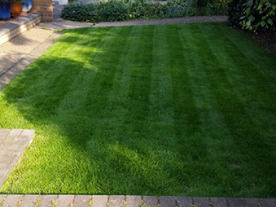 Customer Front Lawn