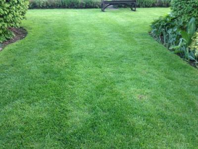 A customer lawn which has been treated by GreenThumb Cheltenham & Glouchester
