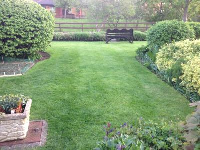 The same customer's Lawn but before GreenThumb Cheltenham & Gloucester had treated it.