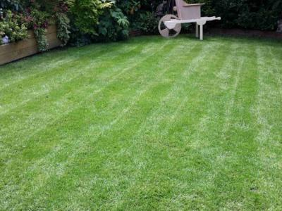 A Customers lawn treated by the GreenThumb Christchurch team.