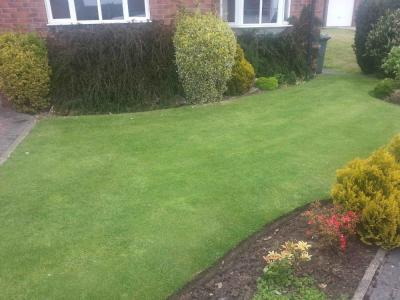 A customer lawn which has been treated by GreenThumb Cleckheaton