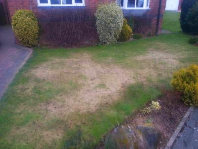 The Same Customer Lawn but before before GreenThumb Cleckheaton had treated it.