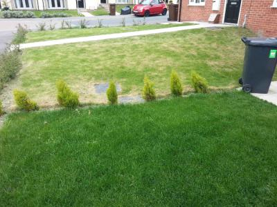 A comparison between two lawns, one that has been treated by Bedford Greenthumb and the other not.