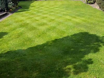 Perfect, Diagonally Chequered Lawn - Treated By GreenThumb Croydon