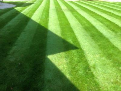 Lush Striped Lawn - Treated By GreenThumb Croydon