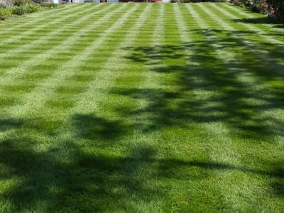 A Gorgeous Striped Lawn – Treated By GreenThumb Croydon & Bromley