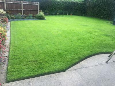 Lush Bordered Lawn – Treated By GreenThumb Croydon