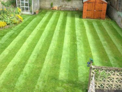 A great example of a customers lawn after being treated by the GreenThumb Croydon Team.