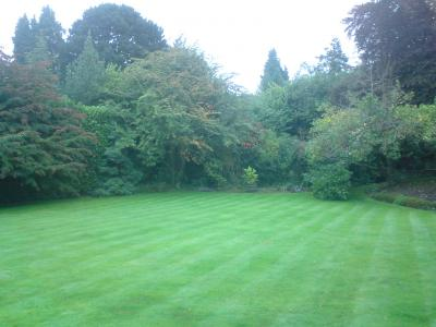 Massive Striped Lawn – Treated By GreenThumb Croydon