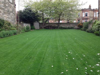 GreenThumb Edinburgh Customer's Lawn