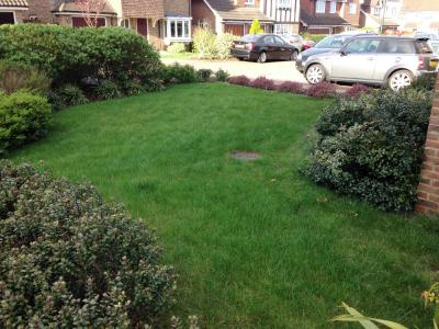 A typical lawn after it is treated by Greenthumb Gravesend