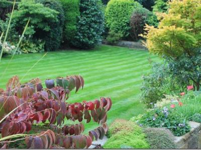 A great example of a customers lawn after being treated by the GreenThumb Halifax Team