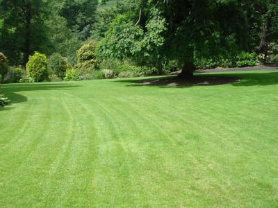 A Customers lawn treated by the GreenThumb Halifax team.