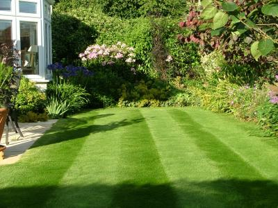 A customer lawn which has been treated by GreenThumb Newbury