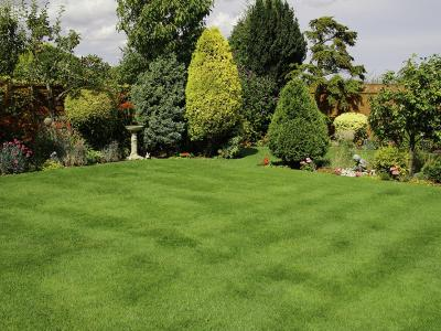 Lawn treated by GreenThumb Newcastle