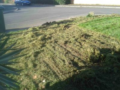 A customers scarified lawn