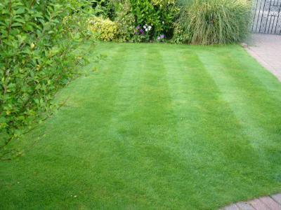 A small lawn treated by Greenthumb Notts North