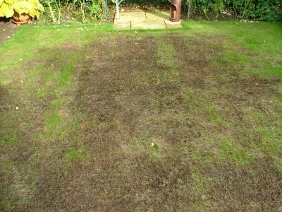 The same customer's Lawn but before GreenThumb Oxford had treated it.