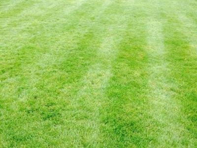 A close-up of a Greenthumb Redcar customers' lawn