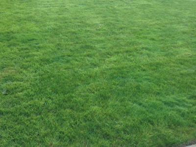 A great example of a small lawn treated by Greenthumb Redcar
