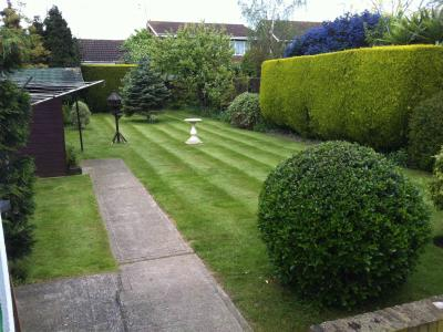 A typical lawn treated by Greenthumb Southend North