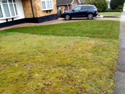 A great comparison of a treated lawn and one that is not