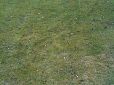 A lawn before being treated by Greenthumb Wakefield