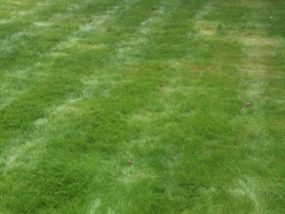A customers lawn after being treated by Greenthumb Wakefield