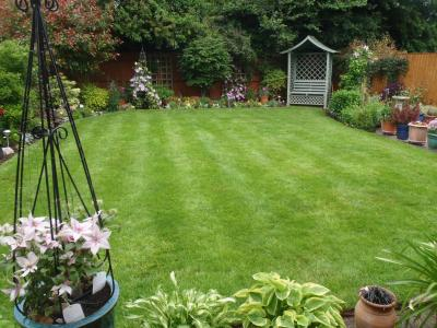 Another lawn after being treated by Greenthumb Worcester