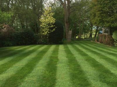 A great example of a lawn treated by Greenthumb Worthing