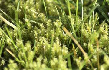 Close up shot of moss