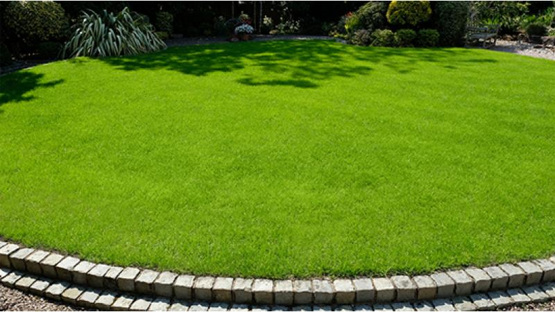 Lawn Makeover