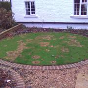 This example shows a severe case of Fusarium which appeared on a small lawn after a heavy snowfall.
