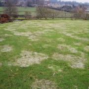 After a period of snow on this lawn, you can clearly see the damage which Snow Mould has caused.