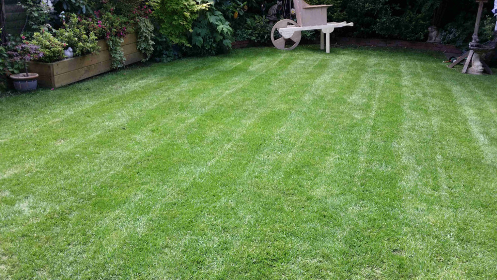 Christchurch branch lawn care experts greenthumb lawn for Ready lawn christchurch