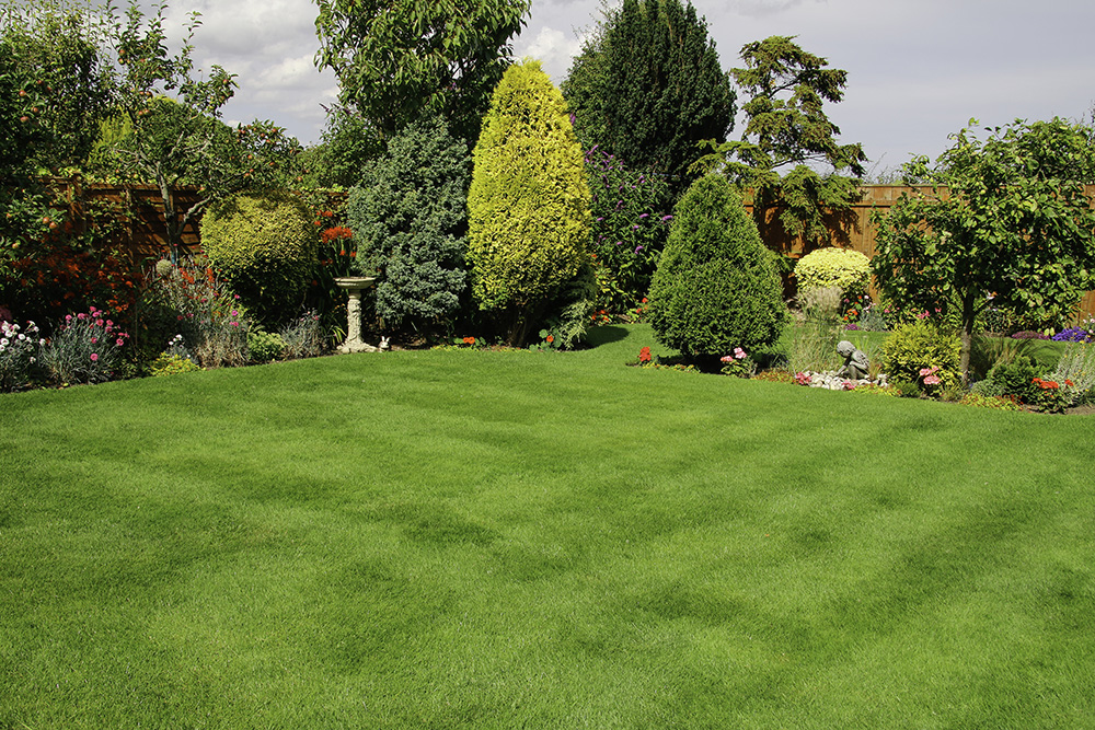 Greenthumb Newcastle Your Local Lawn Care Specialists